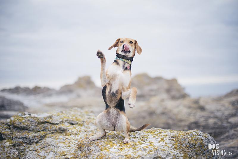 Gotland, Zweden, hondenfotografie, www.dogvision.be