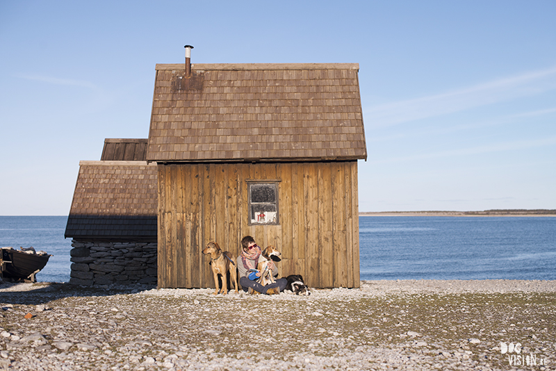 Traveling with dogs, Gotland, Sweden, dog photography, Travel Europe, www.dogvision.eu
