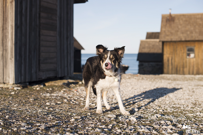 Vissersdorp in Gotland, Zweden, hondenfotografie en reizen met honden, hondenblog, www.DOGvision.be