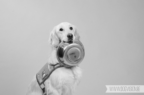 Hummer, assistance dog | www.DOGvision.be