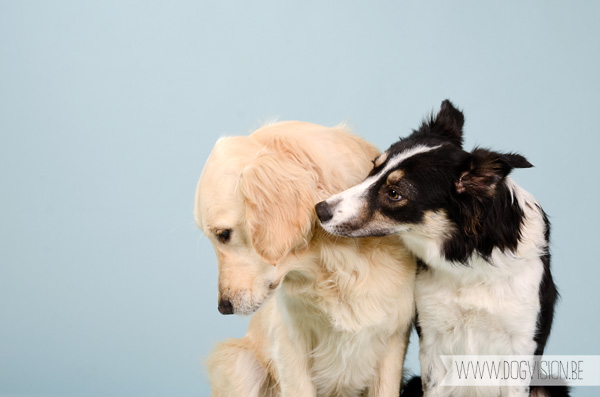 Best friends forever | www.DOGvision.be