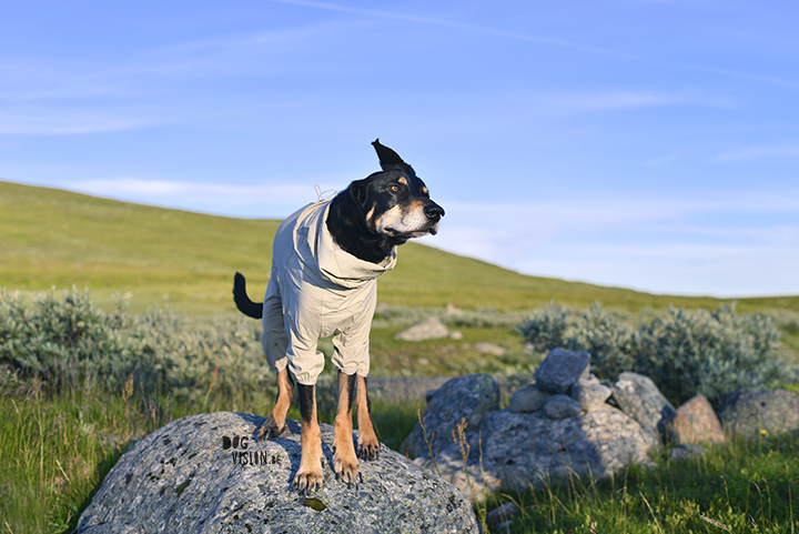 Hurtta Sun and bug blocker review | www.DOGvision.be | dog blog and dog photography tips and tricks