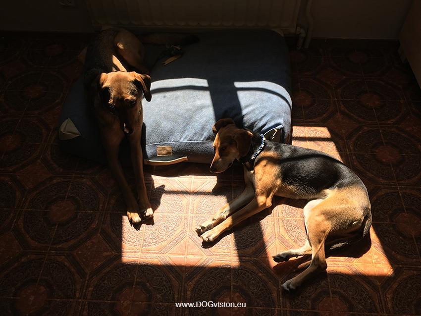 #TongueOutTuesday (29), DOGvision dog blog, adventure dog lifestyle photographer, European dog photographer, Fenne Kusterman, www.DOGvision.eu