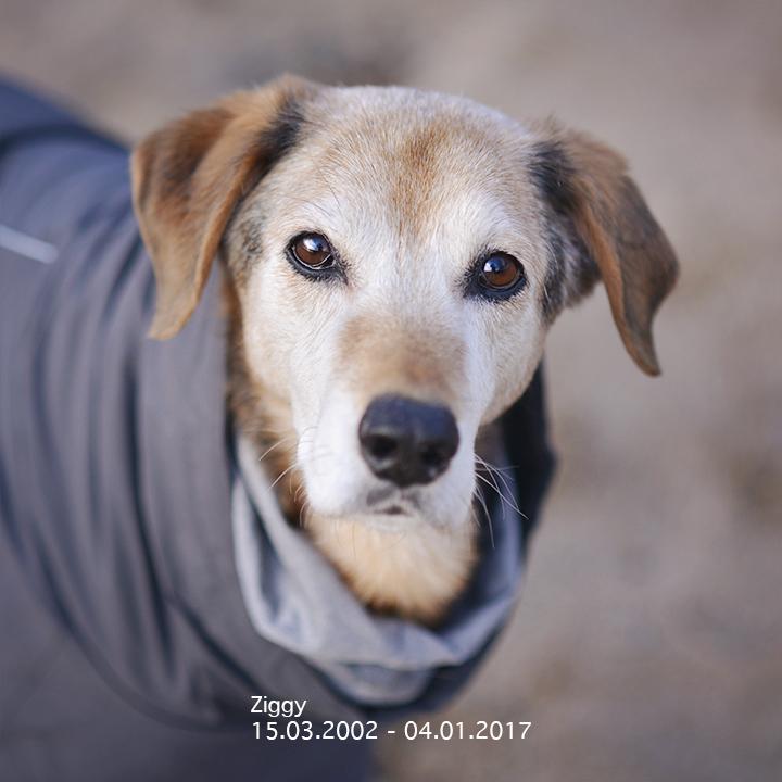 1 jaar Zweden met de honden, een terugblik | www.DOGvision.be