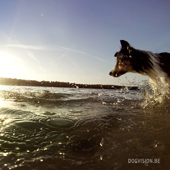 Summer Days | DOGvision | www.DOGvision.be | dog photography