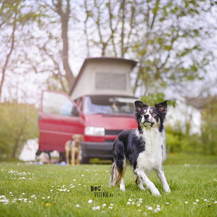 Spring Road trip with dogs in Europe | www.DOGvision.be