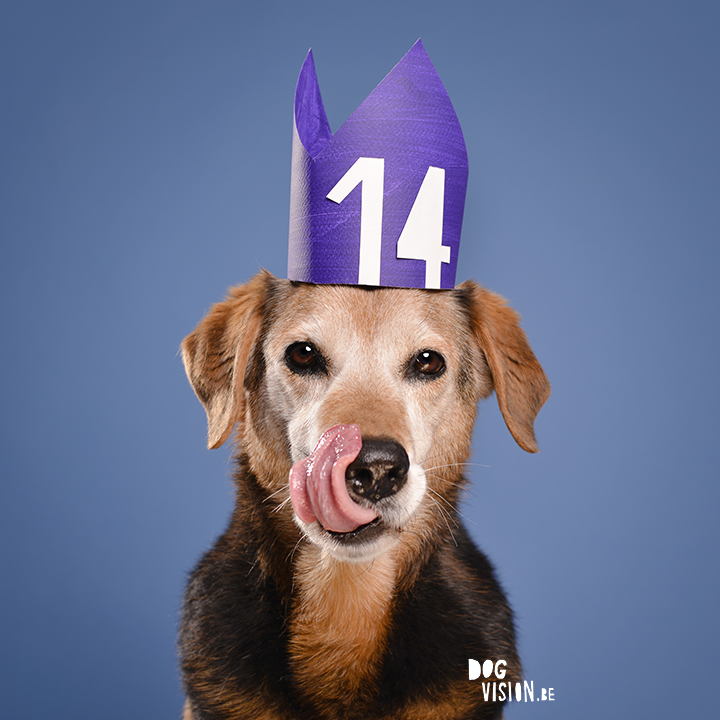 Happy {14th) birthday Ziggy | www.DOGvision.be