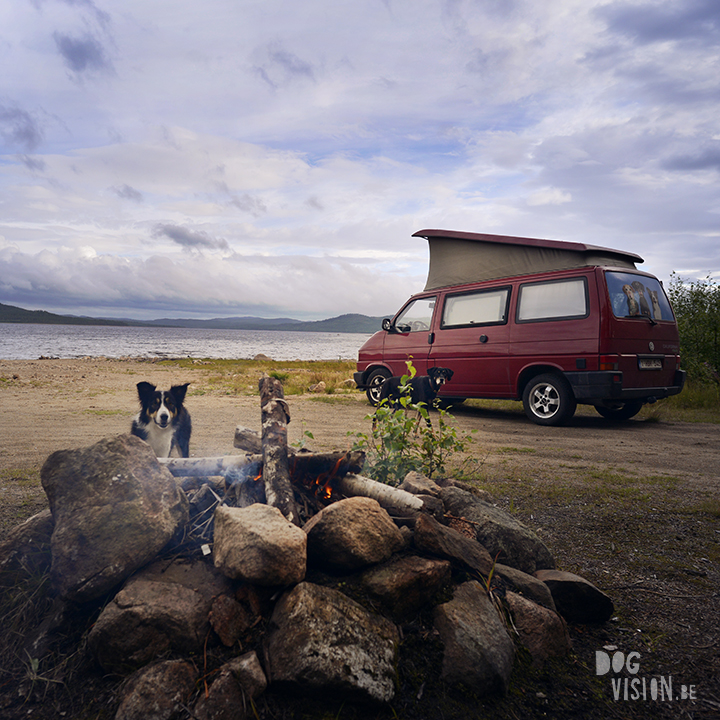 Travel with dogs: Sweden   www.DOGvision.be