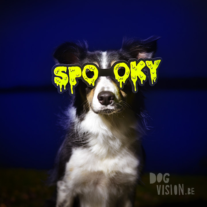 Haloween | Border Collie Mutant | www.DOGvision.be | dog photography