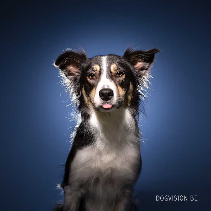 #TongueOutTuesday (40) | www.DOGvision.be | dog photography