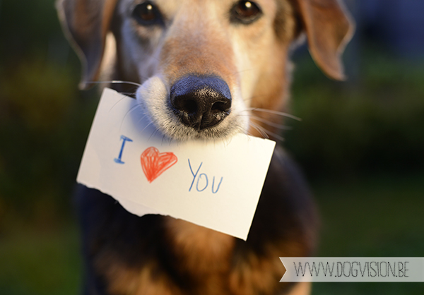 I love you! | www.DOGvision.be | dog photography | Belgium