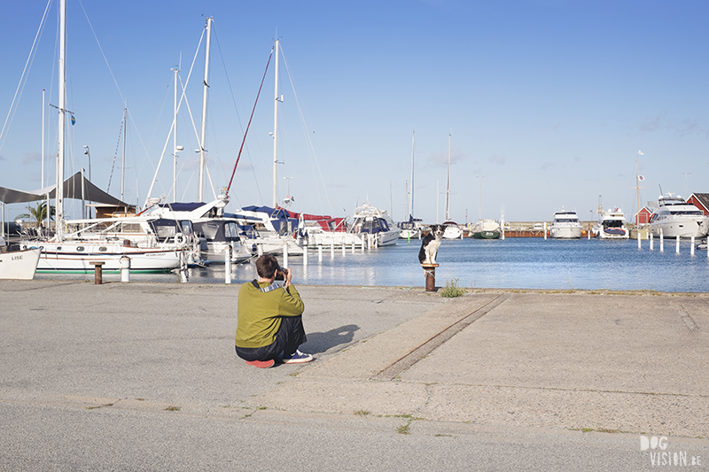 Traveling Europe with dogs, exploring Denmark, Skagen Løkken, AIRbnb Denmark, dog photographer, www.DOGvision.eu