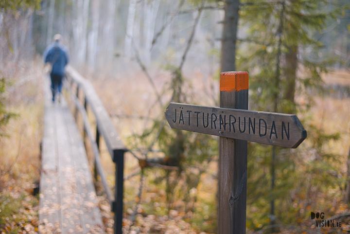 Jätturn naturreservat (Dalarna, Sweden) | www.DOGvision.be