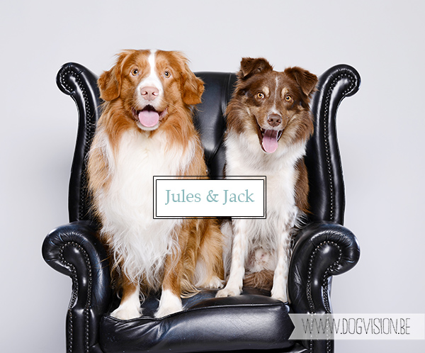 Jules-Jack | www.DOGvision.be | Border Collie | Nova Scotia Duck Tolling retriever