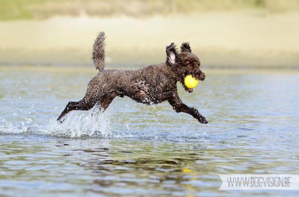 DOGvision | dog photography | Belgium