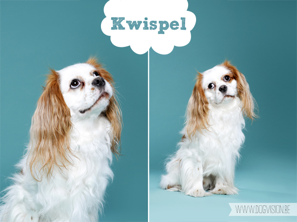 Kwispel | www.DOGvision.be | dog photography