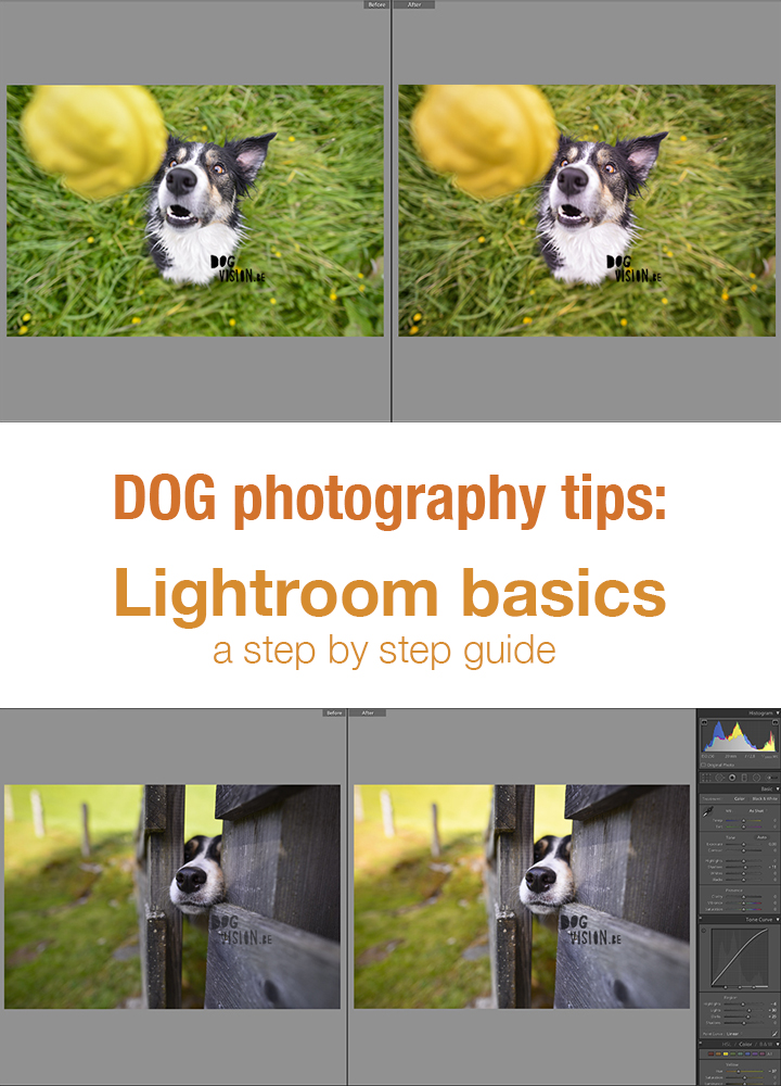 Editing in Lightroom for dog photography | tips & tricks on www.DOGvision.be | lightroom basics