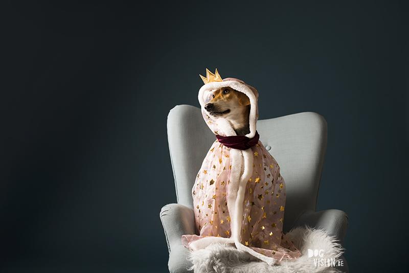 Birthday dog photoshoot, dog photography photoshoot, European photographers, hundfotograf, hondenfotografie, www.DOGvision.eu