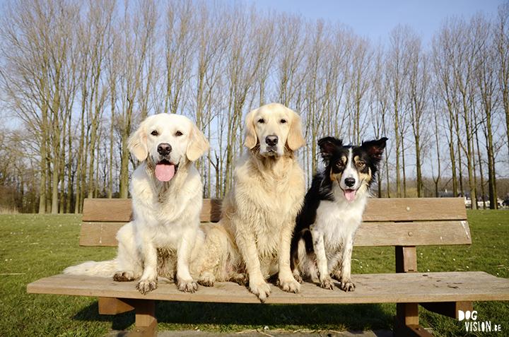 Bubbel, Hummer & Mogwai | www.DOGvision.be | assistance dog Hummer