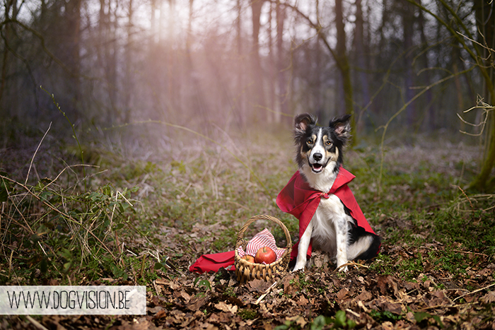 Little Red Riding Hood | www.DOGvision.be | dog photography | hondenfotografie