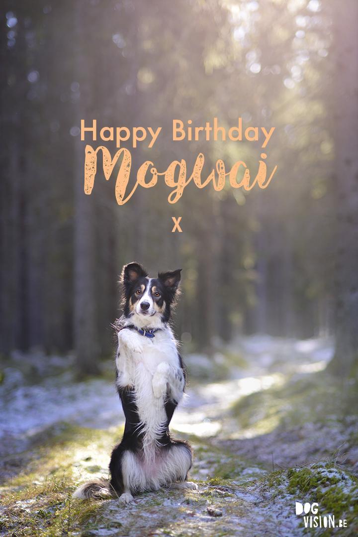 Happy Birthday Mogwai! | www.DOGvision.be | Border Collie