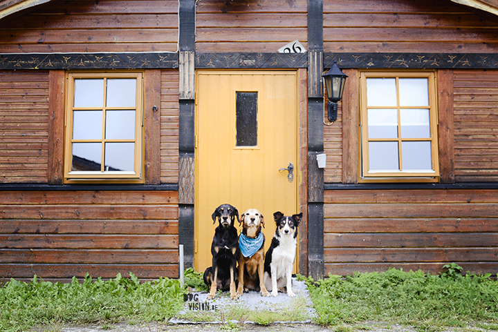 Cottage in Norway, 2014 | dog photography | travel with dogs | www.DOGvision.be
