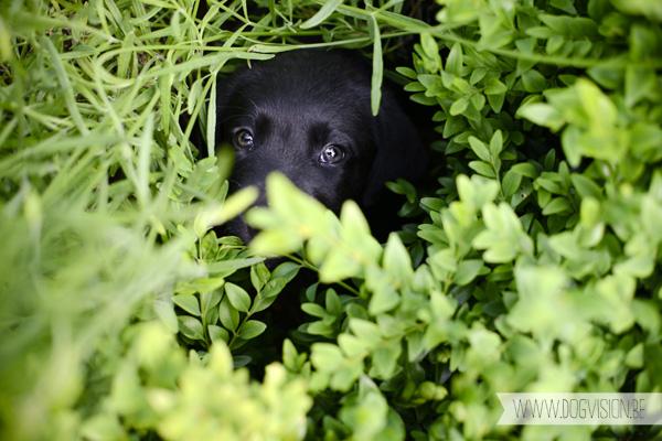 Nuna | www.DOGvision.be