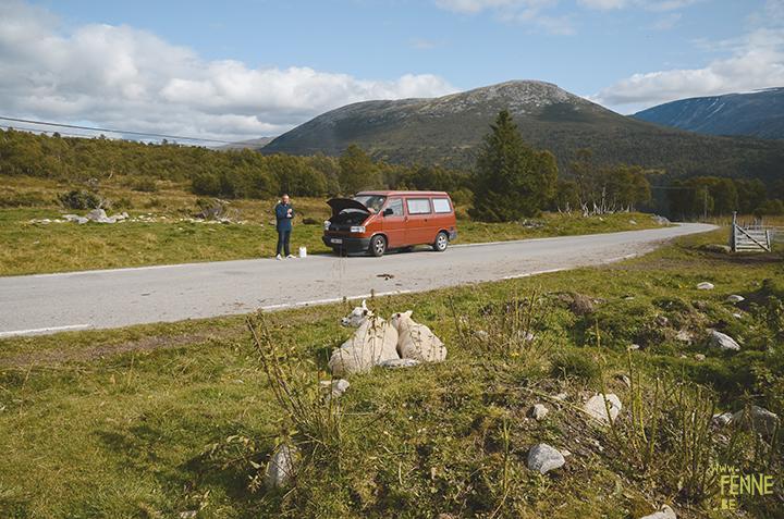 Noorwegen | www.DOGvision.be