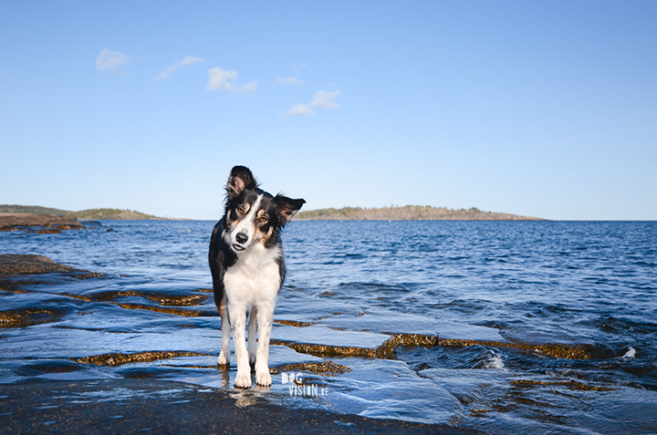 How to find interesting locations for dog photography, dog photography Sweden, dog blog, www.DOGvision.eu