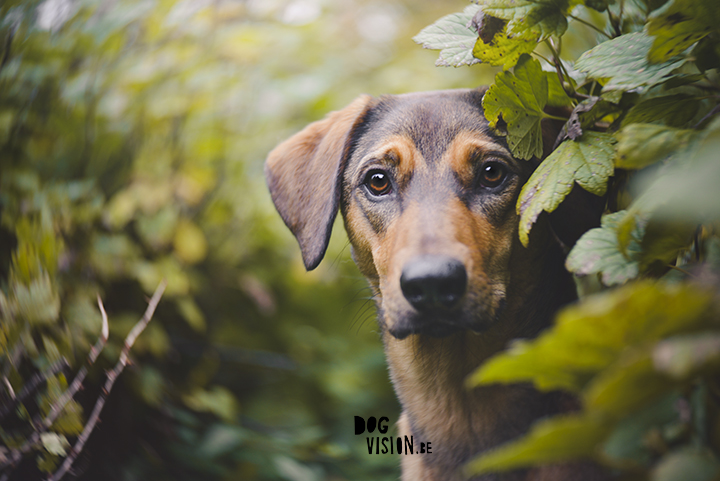 Oona | www.DOGvision.be