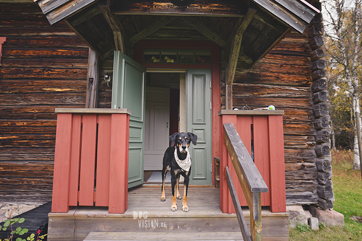 Traveling with dogs: a charming cottage in Orsa (Dalarna/Sweden)| Reizen met honden, Dalarna, Zweden | blog on www.DOGvision.be|