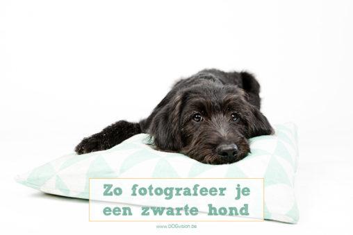 Zo fotografeer je een zwarte hond   www.DOGvision.be