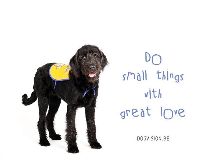 Do small things with great love   www.DOGvision.be