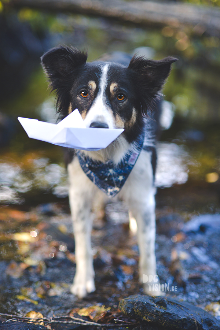 Riverside | Border Collie | creative dog photography | paper boat | The story behind the photo, blog on www.DOGvision.be (Hondenfotografie)