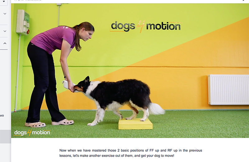 Online dog training course with Dogs for Motion from Slovenia, review, www.DOGvision.eu