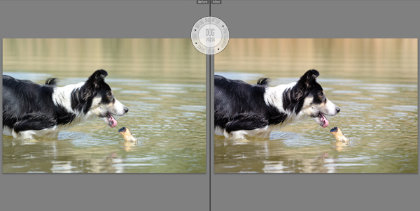 Dog photography tricks | www.DOGvision.be