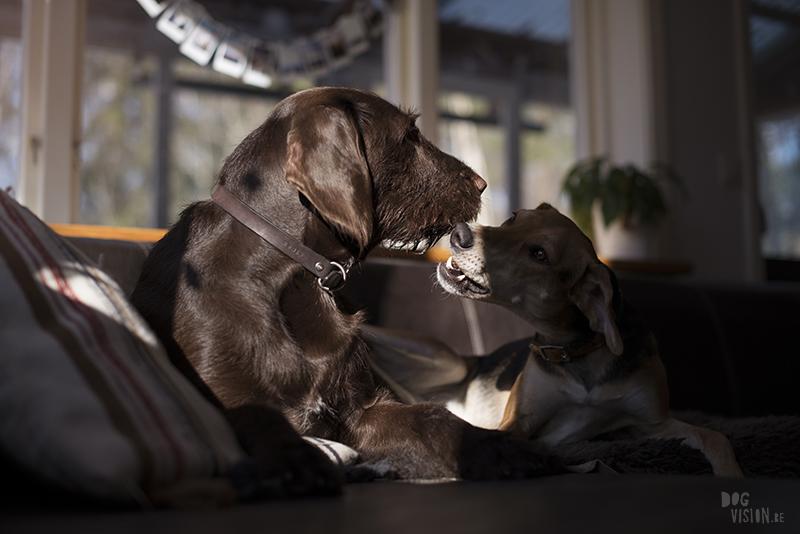 honden blog, hondenfotografie, wonen in Zweden, honden in Zweden, www.DOGvision.be