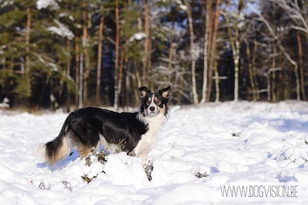 Sneeuw | www.DOGvision.be | hondenfotografie