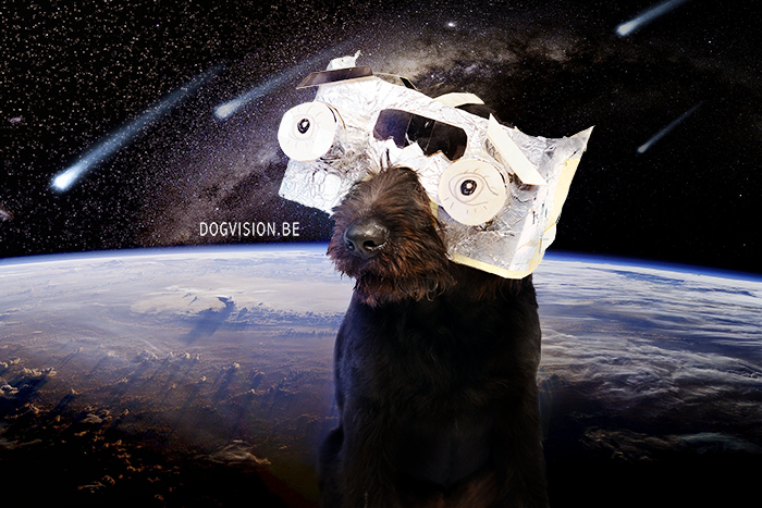 Labradoodle Oya | to the moon and back | DOGvision dog photography