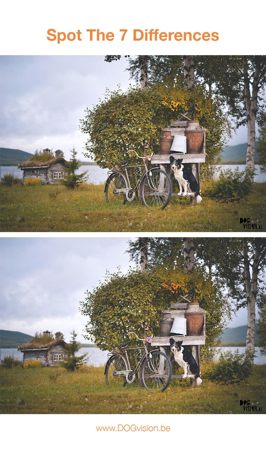 Zoek de 7 verschillen | www.DOGvision.be