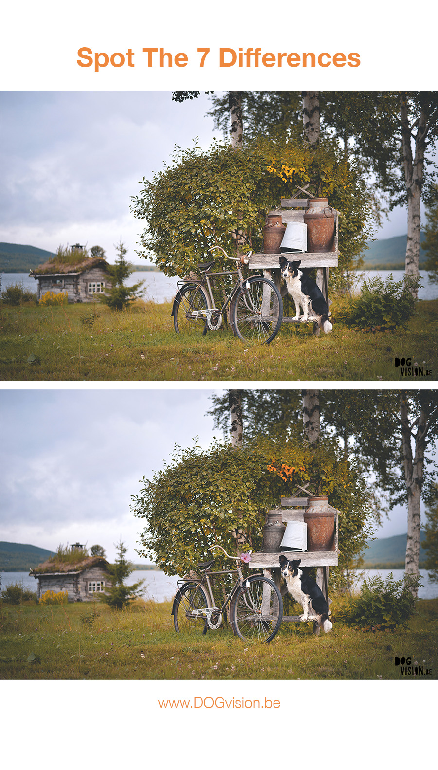 A game on Monday: Can you spot the 7 differences? | DOGvision, dog photography | Sweden | Blog on www.DOGvision.be