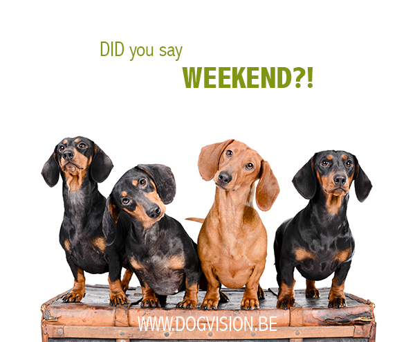 WEEKEND | DOGvision.be | dog photography