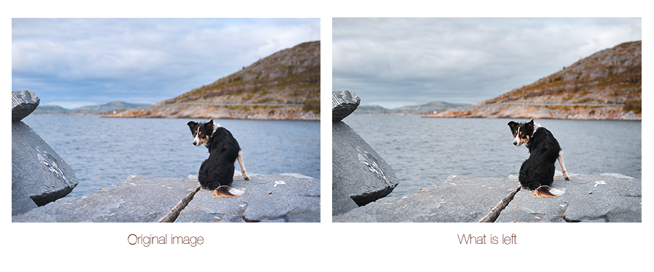 """DOGvision lightroom presets """"what is left"""" on Etsy   www.DOGvision.be"""