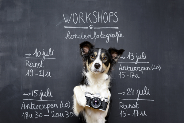 Workshops DOGvision