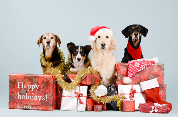 X-mas | www.DOGvision.be