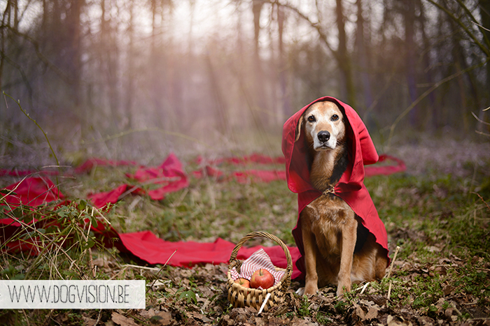 Little red riding hood | inspired by fairy tales | dog photography tips & tricks | www.DOGvision.be