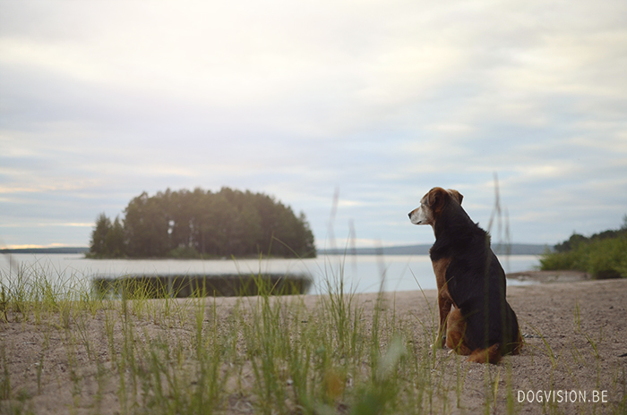 Road trip Sweden | www.DOGvision.be | dog photography | travel