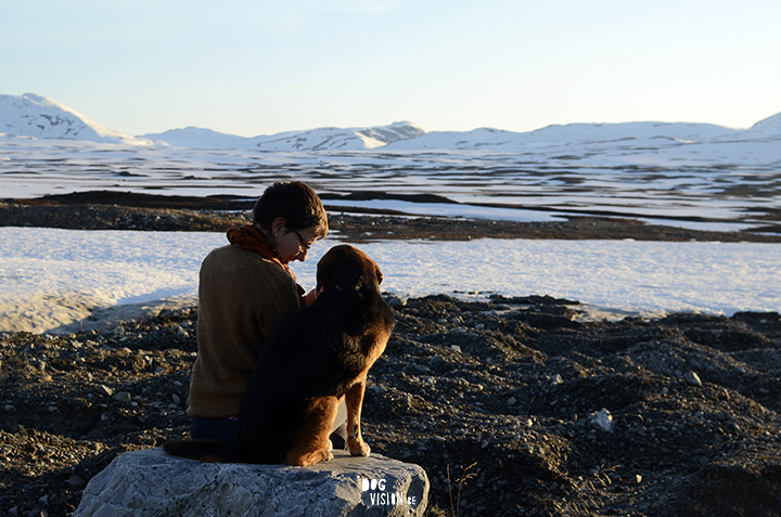 Ziggy in Lapland, hondenfotografie www.DOGvision.be
