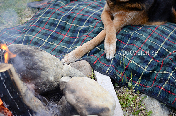 Road trip Sweden with dogs | www.DOGvision.be | dog photography