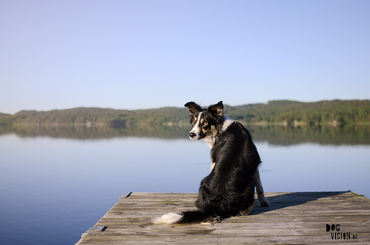 Sweden | www.DOGvision.be | dog photography | Border Collie